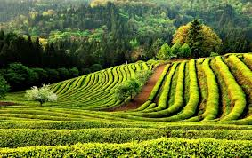 22 paisajes asombrosos. Images?q=tbn:ANd9GcTYGmaFB-1YuHf124IL2T3-H6ZE4CRNCBnTGiPaZLei9MR8DR8X