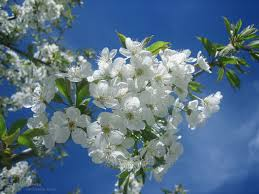 Image result for april flowers