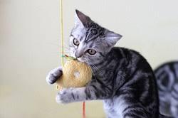 <b>Cat</b> Behavior and Training - <b>Play</b> and <b>Play Toys</b> | VCA <b>Animal</b> Hospital
