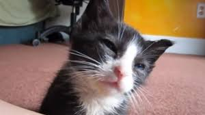 kitten becomes entranced music struggles to stay awake kitten becomes entranced music struggles to stay awake