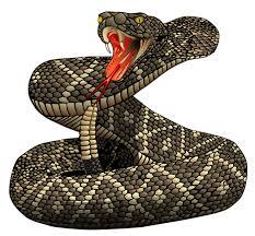 Image result for rattlesnake clipart