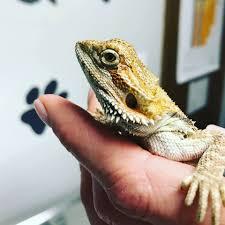 Exotic <b>Animals</b> — <b>Complete</b> Care Animal Hospital