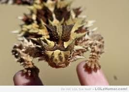 Australian Thorny Dragon - LOLz Humor via Relatably.com