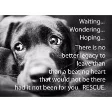Image result for rescue dogs pictures