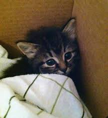 Image result for kittens crying