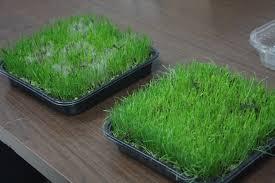 Pennington Grass Seed