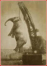 Elefanta Mary condenada a muerte en la horca