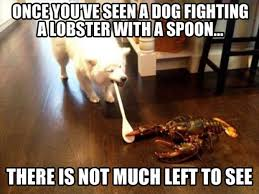 A dog fighting a lobster with spoon - Memes Comix Funny Pix via Relatably.com
