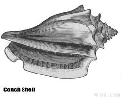 conch symbolism in lord of the flies essay about myself   essay        conch symbolism in lord of the flies essay about myself   image
