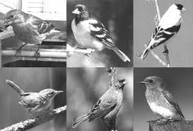 <b>songbird</b> magnet® instructions