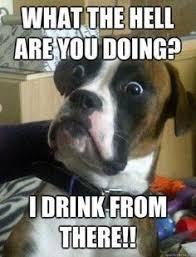 MEMES on Pinterest | Dog Memes, Funny Pugs and Pugs via Relatably.com
