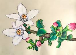 what inspires me karen bailey studio occasional artist fairy wax flower coloured pencil and ink