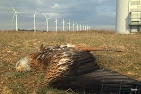 Image result for wind power eagles images