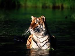 Nature & Wildlife Images?q=tbn:ANd9GcT_cwhQUvEhnSV5bpwSHUQBbL6Em7NHVhQWiZQDHwQfMqXEsHxe