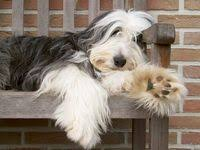 500+ <b>Adorable Dogs</b> ideas | dogs, <b>cute dogs</b>, cute animals