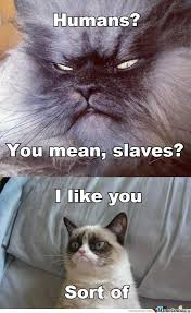 Evil Cat Memes. Best Collection of Funny Evil Cat Pictures via Relatably.com