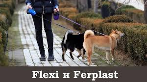 Надежность <b>рулеток Flexi</b> и Ferplast - отзыв год спустя - YouTube