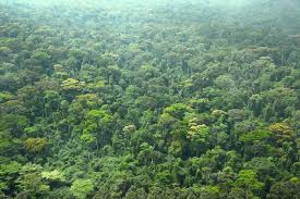 the environment in c ocirc te d ivoire challenges and opportunities primary forest in cocircte d ivoire