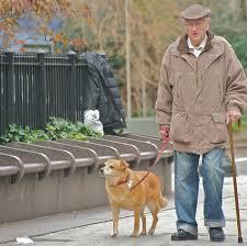 Resultado de imagem para cão com idoso