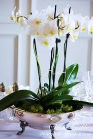 day orchid decor: orchids  orchids