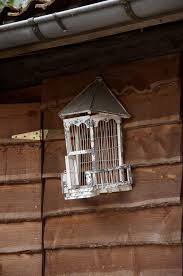 birds and cages writework english bird cage photo taken in