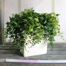 <b>Искусственное растение</b> - Aliexpress - Fresh <b>Green</b> Melon Seeds ...