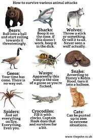 Deadliest creatures   Tyson Adams via Relatably.com