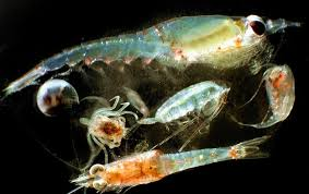 <b>The Ocean Is</b> Running Out of Breath, Scientists Warn - Scientific ...