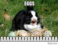 Animal funnies on Pinterest   Grumpy Kitty, Grumpy Cat and Grumpy ... via Relatably.com