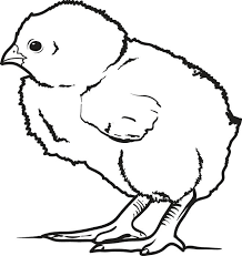 Small Picture Baby Chick Perfect Chick Coloring Pages Coloring Page and