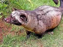 Animal de ptit loulou - 7 décembre trouvé par Lolo - Page 2 Images?q=tbn:ANd9GcTaFV82-skThBxxeXbX6SAJARAt5FIctYULUn-Odbmjon7qXrVqvg