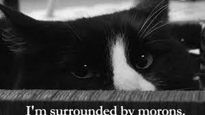 sad-french-kitty-wins-best-cat-video-on-the-internet--61bcf9ec0a.jpg via Relatably.com