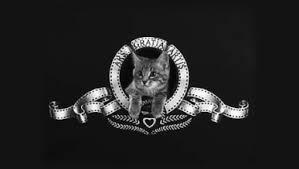 Afbeeldingsresultaat voor kattenfilm
