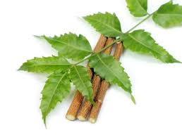 Image result for neem tree