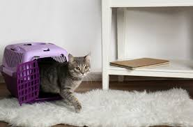 <b>Cats</b> in Carriers: What's Going Through Your <b>Cat's</b> Head?