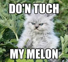Do'n Tuch my melon - Miserly Cat - quickmeme via Relatably.com