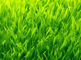 Znalezione obrazy dla zapytania trawa