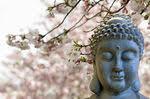 Zen Buddha Meditating Under Cherry Blossom Trees - - canstock6016788