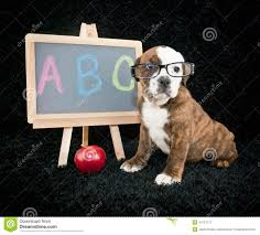 Image result for school animals