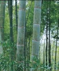 <b>Мозаика из бамбука</b> и кокоса <b>Мозаика из бамбука</b>