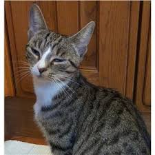 Adopt a <b>cat</b>