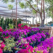 Desert <b>Horizon</b> Nursery: Tree and Plant Nursery, Landscape Design ...