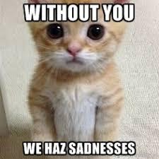 Memes Vault Sad Cat Memes via Relatably.com