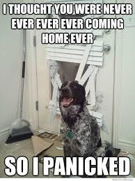 25 Funny Dog Memes via Relatably.com