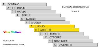 Potentilla brauneana [Cinquefoglia di Braune] - Flora Italiana