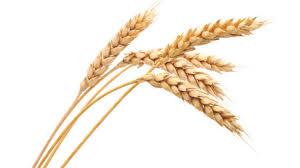 Image result for grain