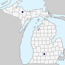 Petasites hybridus - Michigan Flora
