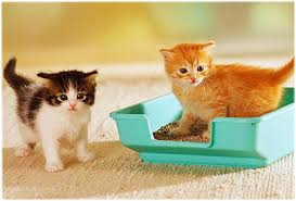 cats dont care where their litter box is placed cat litter box
