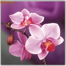 Shop Orchid Pink - Great deals on Orchid Pink on AliExpress