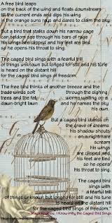 images about momma maya on pinterest   pictures of  maya and    i know why the caged bird sings maya angelou